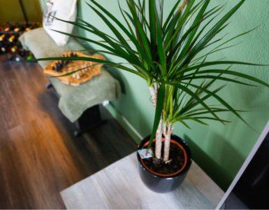 Planten in huis!